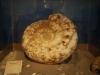 helmis museum zante02