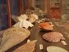 helmis museum zante04