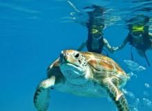 diving turtle spotting zante