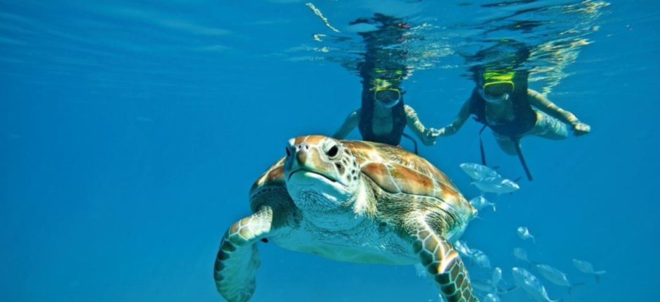 diving-turtle-spotting-zante-940x430