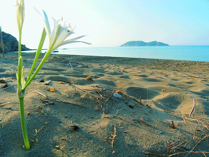 Marine Park - Herodotos Studios, Zakynthos - Limni Keriou