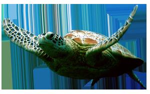 Turtle Lake Apartments